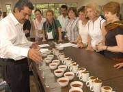 Loại trà này có gì đặc biệt mà đại gia rút ví 50 triệu chỉ để mua 2kg?