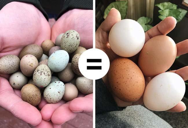 11 quan niệm sai lầm khi ăn trứng gà ai cũng mắc phải