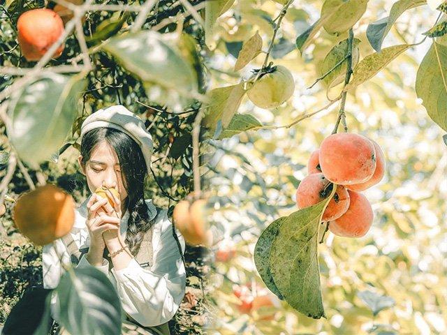 Mùa này đừng quên check-in vườn hồng chín đỏ mọng tuyệt đẹp ở Đà Lạt