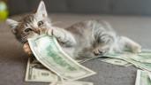 Cứ nghĩ phụ nữ ngày nay thực dụng, ai ngờ về nhà lũ chó mèo còn tham tiền hơn thế
