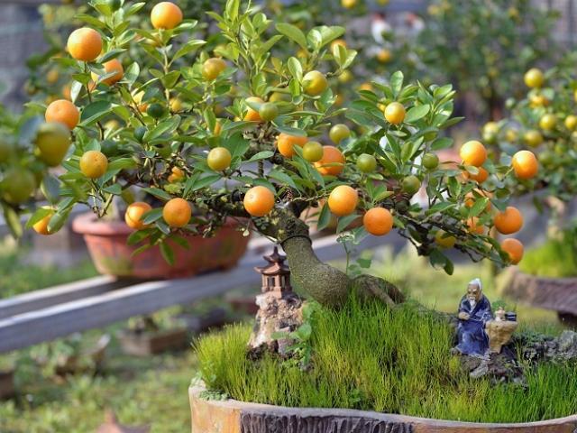 7 loại cây cảnh trồng trước cửa nhà giúp tài vận lên cao, gia chủ yên tâm hưởng phúc