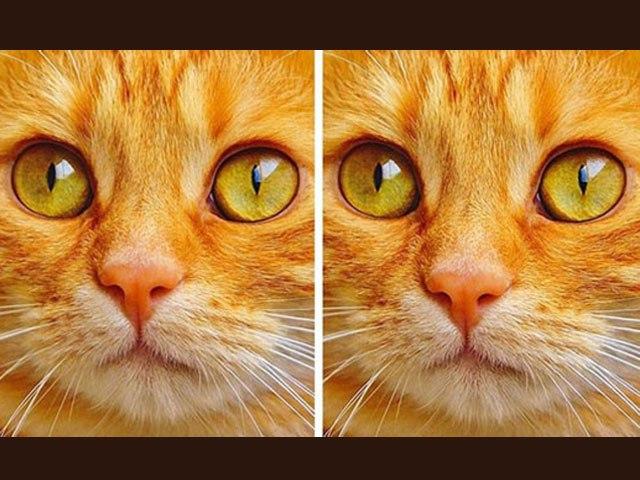 Bạn mất bao nhiêu giây để tìm ra điểm khác biệt giữa hai bức tranh này?