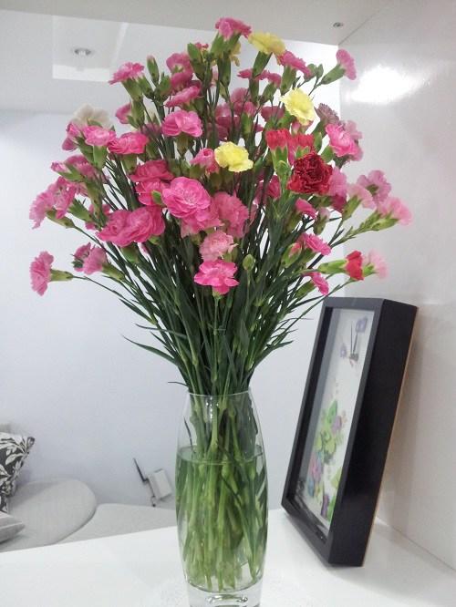 y nghia hoa cam chuong, cach trong va cham soc giup hoa tuoi tot - 7