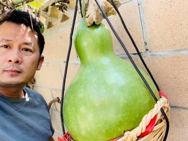 Ca sĩ Bằng Kiều khoe hoa quả trĩu trịt trong vườn nhà, có trái to hơn cả người