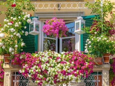 Những loại hoa thơm như nước hoa, rực rỡ xuất sắc nên trồng ở ban công