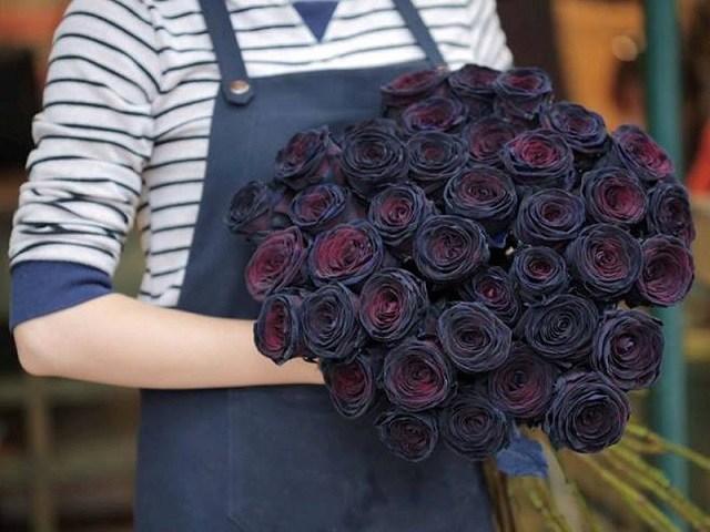 Ý nghĩa hoa hồng đen - loài hoa bí ẩn, hiếm có