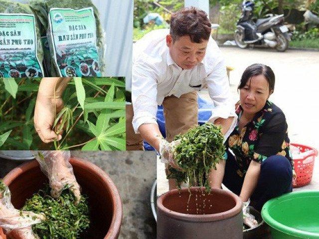 Phú Thọ: Rau nhà nghèo một thời ăn chống đói, nay là đặc sản, thu cả triệu đồng mỗi ngày