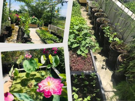 Ông bố Đà Nẵng trồng cả vườn rau như trang trại, cẩu sen lên sân thượng rộng 30m²