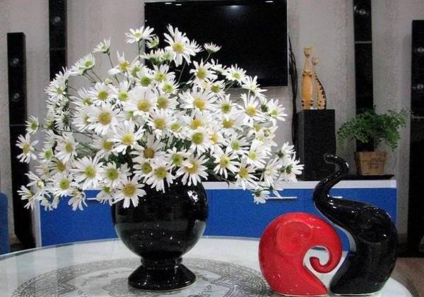Ý nghĩa hoa Cúc Tana và cách cắm hoa đẹp nhất - 4