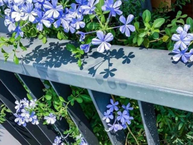 5 loại hoa càng nóng càng nở hoa đẹp mê mẩn, nhìn thôi đã thấy sảng khoái
