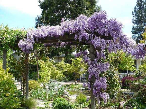 12 cây dây leo đẹp, dễ trồng trong nhà hoặc ngoài ban công - 4