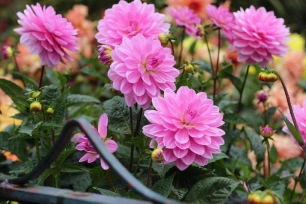 Ý nghĩa các loài hoa trong tình yêu, đời sống theo loại và màu sắc - 6