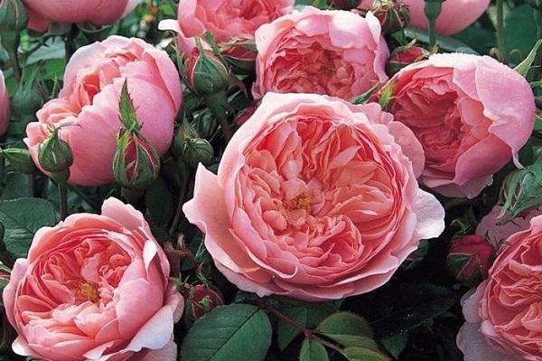 Ý nghĩa các loài hoa trong tình yêu, đời sống theo loại và màu sắc - 13