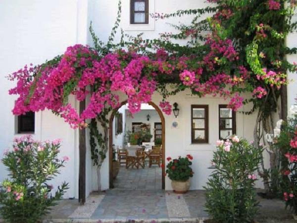 12 cây dây leo đẹp, dễ trồng trong nhà hoặc ngoài ban công - 1