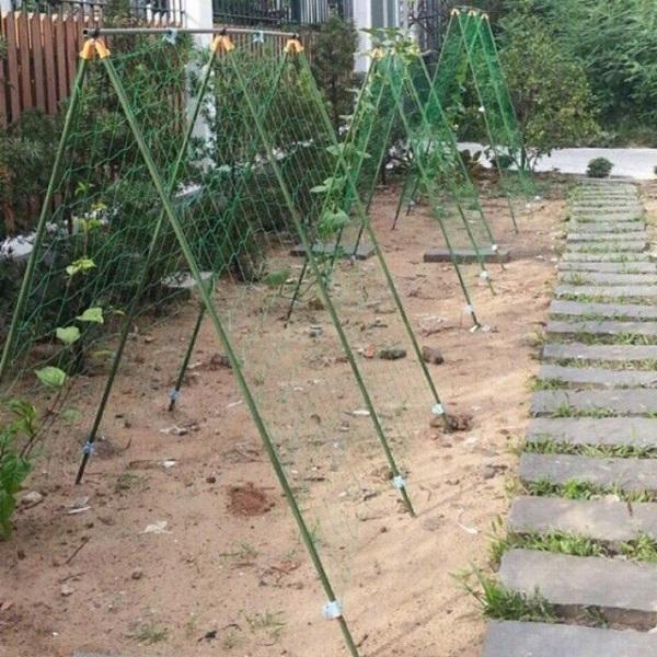 Cách trồng dưa leo trong chậu, thùng xốp đơn giản tại nhà - 5