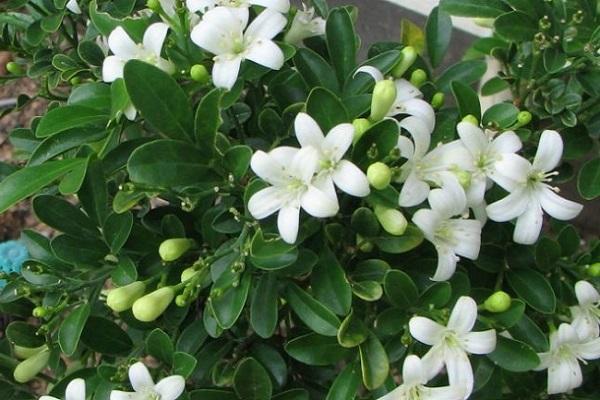 Ý nghĩa các loài hoa trong tình yêu, đời sống theo loại và màu sắc - 4