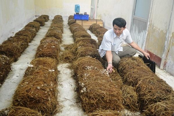 Cách trồng nấm rơm bằng mùn cưa, rơm tại nhà cho năng suất cao - 5