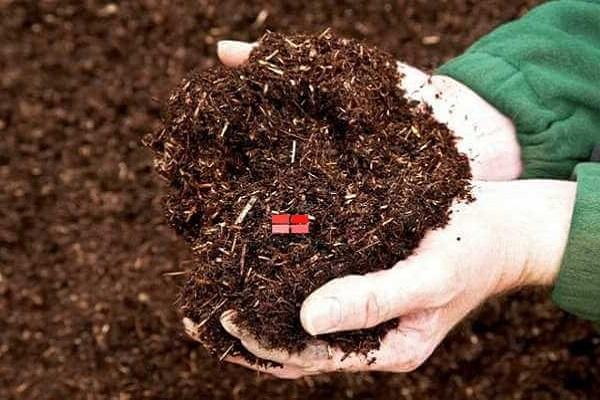 Cách trồng rau muống trong thùng xốp bằng hạt tại nhà - 3