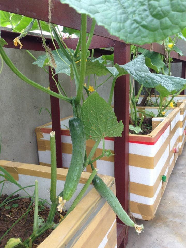 Tái chế thùng xốp dùng hơn chục năm, mẹ đảm bội thu vườn rau xanh sân thượng 30m2 giữa phố - 10
