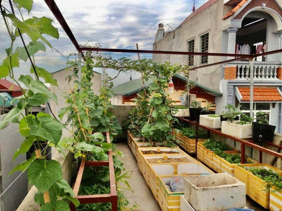 Tái chế thùng xốp dùng hơn chục năm, mẹ đảm bội thu vườn rau xanh sân thượng 30m2 giữa phố - 3
