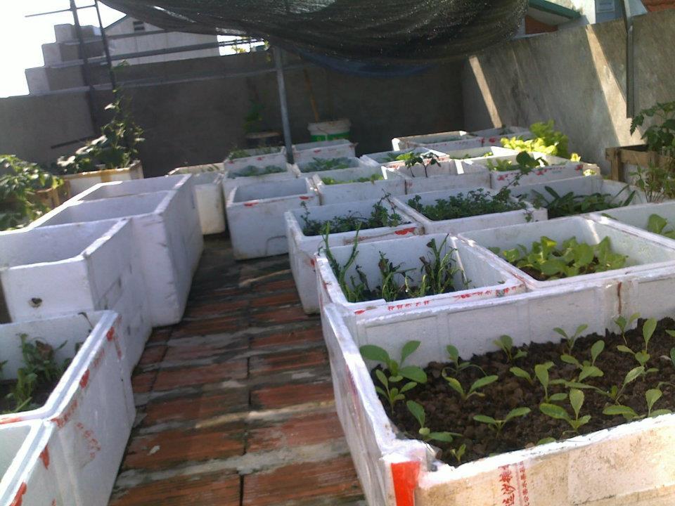 Tái chế thùng xốp dùng hơn chục năm, mẹ đảm bội thu vườn rau xanh sân thượng 30m2 giữa phố - 8