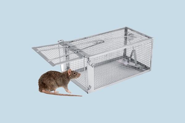 Cách làm bẫy chuột thông minh bằng chai nhựa, thùng sơn đơn giản - 8