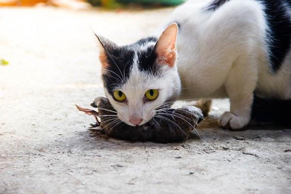 Những cách diệt chuột trong nhà tận gốc vô cùng hiệu quả - 8