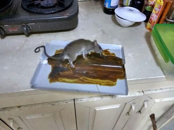 Cách làm bẫy chuột thông minh bằng chai nhựa, thùng sơn đơn giản - 7