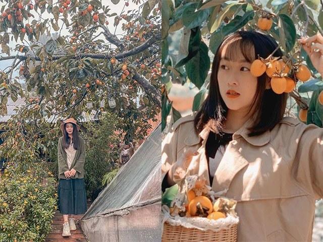 Lạc lối trong 4 khu vườn hồng đẹp như tiên cảnh ở Đà Lạt, đảm bảo chụp ảnh cháy máy