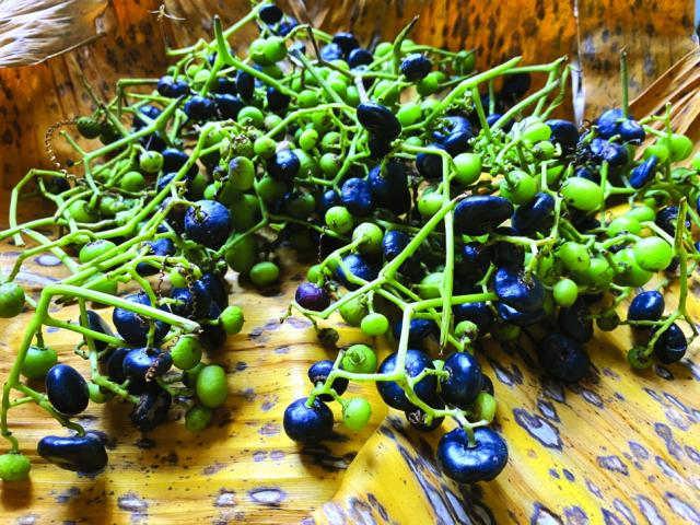 Loại quả xưa để chín rụng đầy gốc, giờ thành đặc sản lạ cực ngon được lùng mua khắp nơi