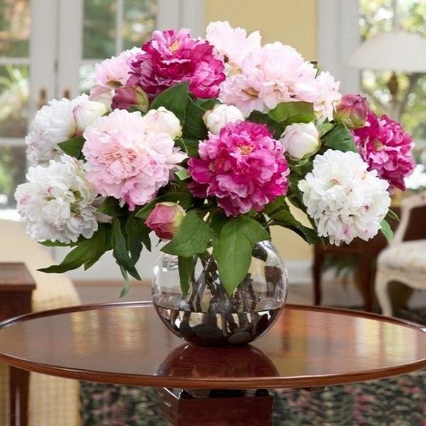 Hoa Cẩm Tú Cầu: Đặc điểm, ý nghĩa, cách trồng và chăm sóc - 6