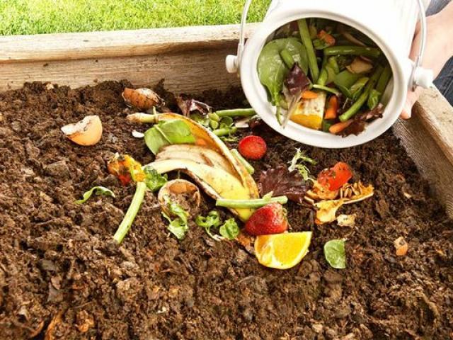 Biến rác thải thành kho báu, mang ra tưới cây tốt vù vù, không cần mua phân bón
