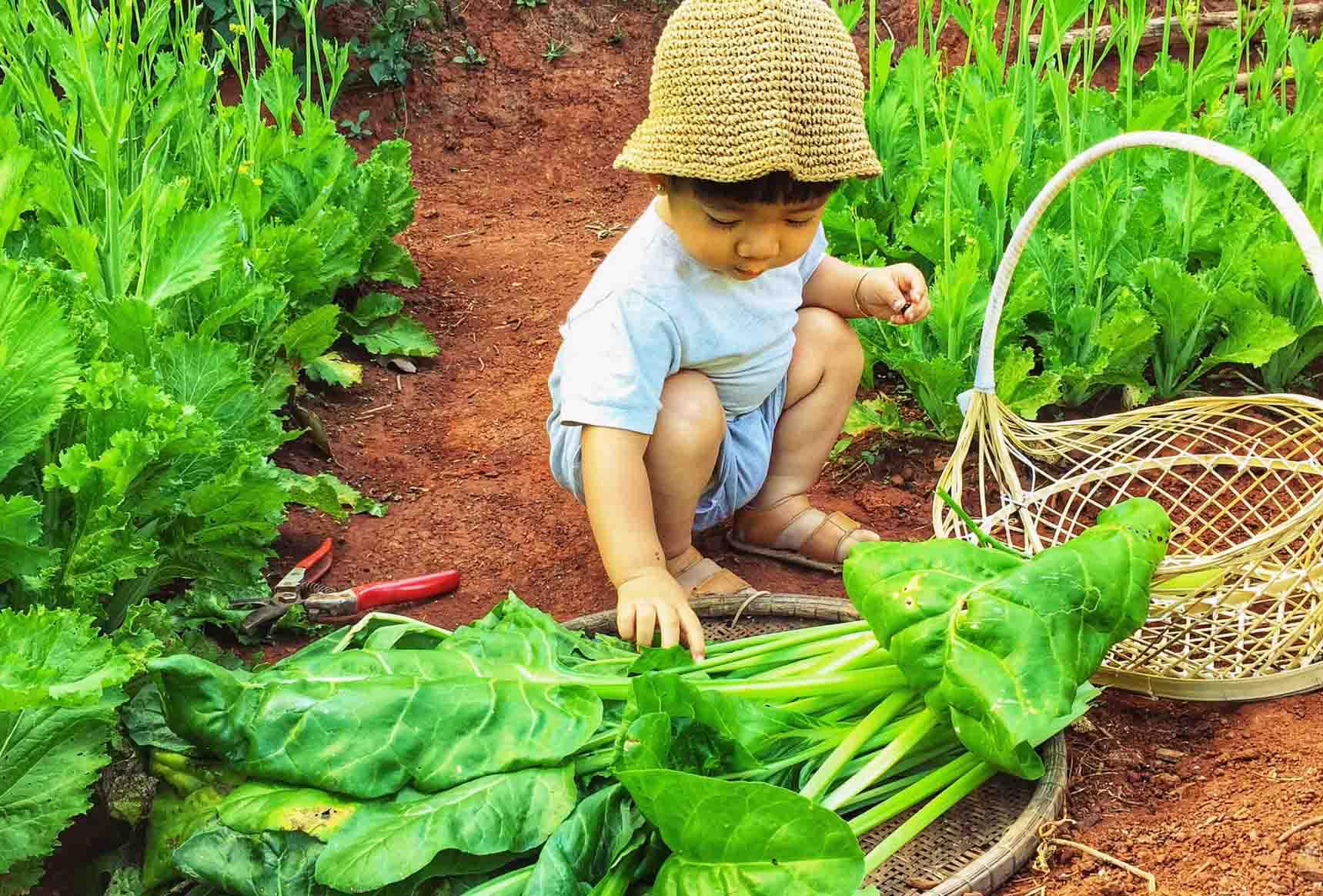 """Cầm 200 triệu đồng """"bỏ phố về quê"""", 9X thành nông dân chăm vườn rau trái ai nhìn cũng mê - 11"""