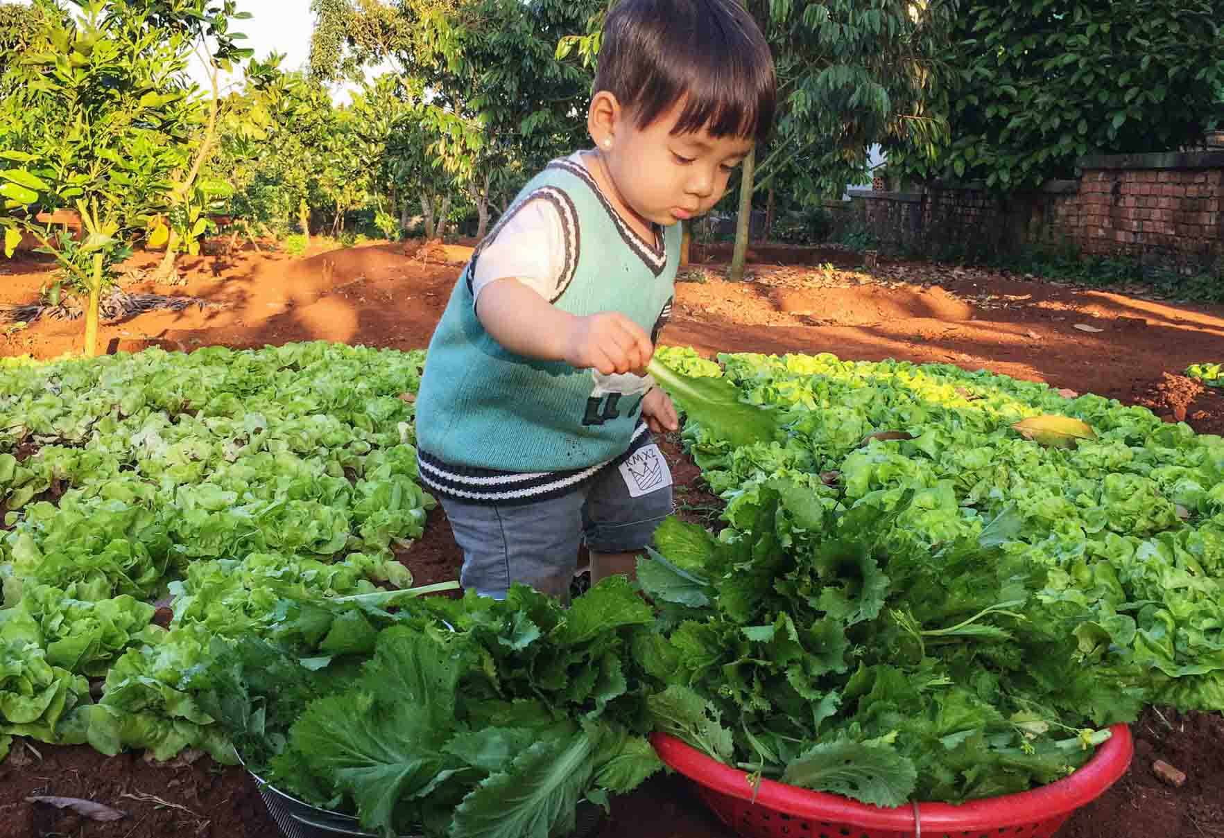 """Cầm 200 triệu đồng """"bỏ phố về quê"""", 9X thành nông dân chăm vườn rau trái ai nhìn cũng mê - 12"""
