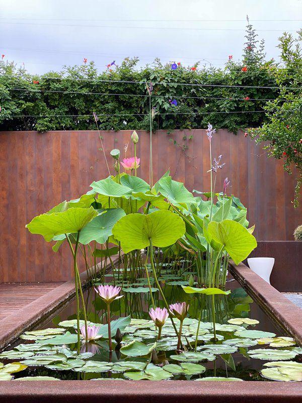 Hoa hậu Dương Mỹ Linh sang Mỹ mát tay trồng trái cây, lựu lúc lỉu đỏ rực một góc vườn - 11
