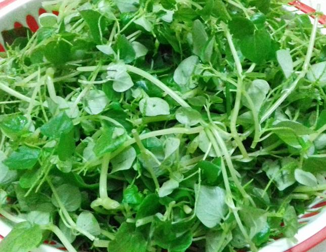 Bà bầu ăn rau càng cua được không và ăn bao nhiêu thì tốt? - 1
