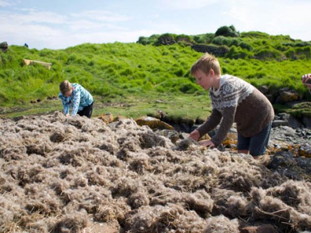 Tại hòn đảo nhỏ này, người ta đổ xô tới tìm những chiếc lông vũ đắt nhất thế giới
