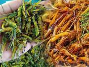 """Loại côn trùng """"phá hoại"""" nay thành đặc sản, giá cao gấp 3 thịt gà, canxi nhiều hơn 10 lần"""