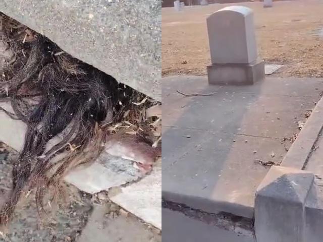 Thấy nhúm tóc thò ra từ ngôi mộ 100 tuổi, người đàn ông hốt hoảng khi quay trở lại