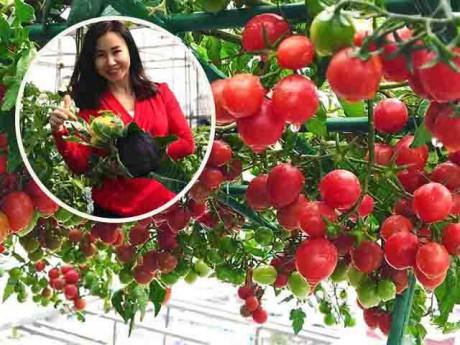 Trồng cà chua vào 2 thùng xốp trên sân thượng, mẹ Hà Nội bội thu, quả sai nhìn sướng mắt