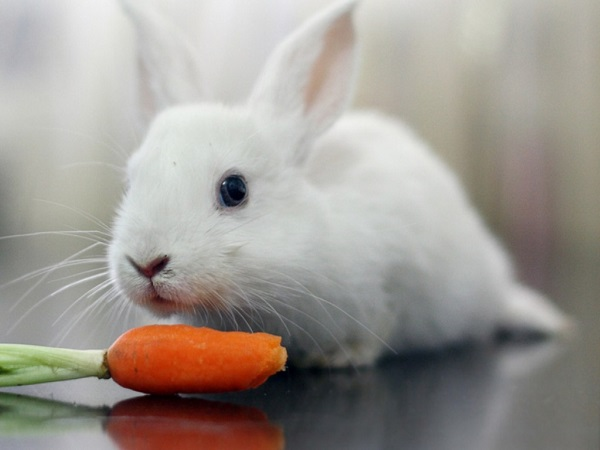 Cách nuôi thỏ đúng kỹ thuật giúp thỏ khoẻ phát triển tốt - 5