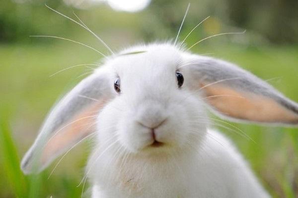 Cách nuôi thỏ đúng kỹ thuật giúp thỏ khoẻ phát triển tốt - 1