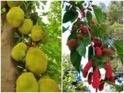 5 loại cây tuyệt đối không trồng trước nhà 3 tháng cuối năm, có phải chặt ngay mới tốt