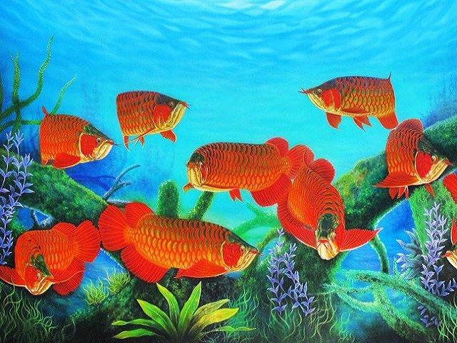 Các loại cá cảnh vừa đẹp lại vừa dễ nuôi giúp bể cá lung linh, nhà bội phần sang chảnh