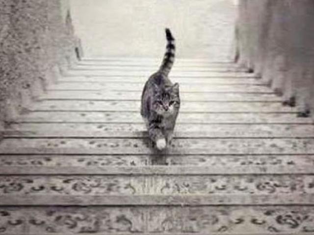 Chú mèo đang đi lên hay đi xuống? Câu trả lời tiết lộ năng lực lãnh đạo bẩm sinh