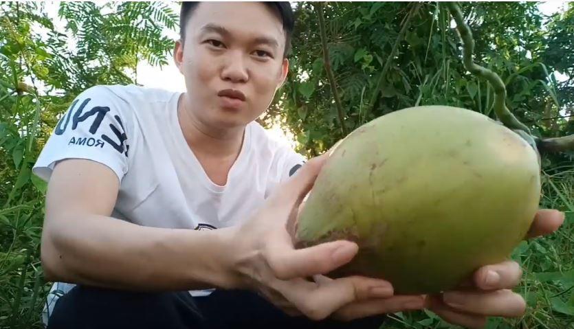 Thực hư giống dừa sữa chỉ có ở Miền Tây đang được nhiều người săn lùng