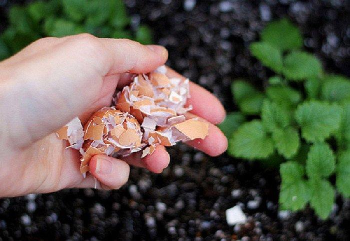 6 loại phân bón thần thánh được chế từ đậu phụ, vỏ chuối,...