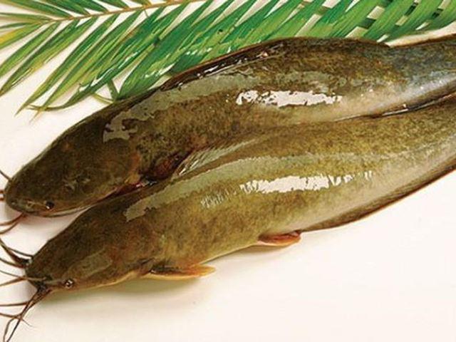 4 cách nấu món cháo cá trê cho bé ngon nhất không bị tanh
