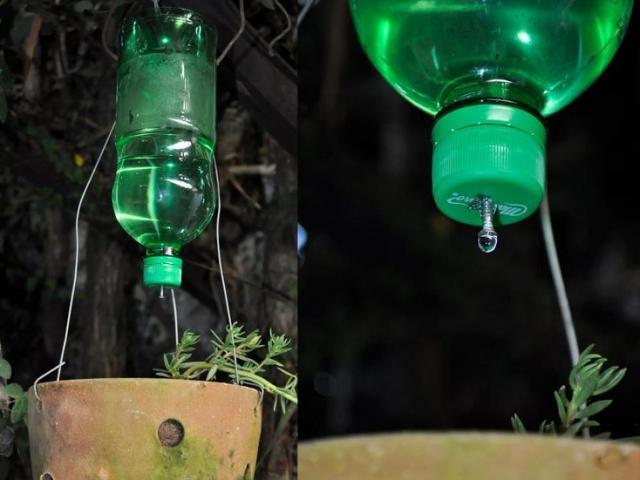 Học người nước ngoài mang chai nhựa ra vườn, tôi đã hối hận vì không biết sớm hơn