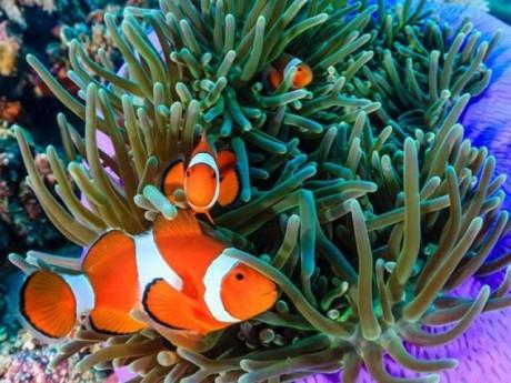 Cá Hề - Đặc điểm, tập tính, giá bán và cách nuôi cá khỏe